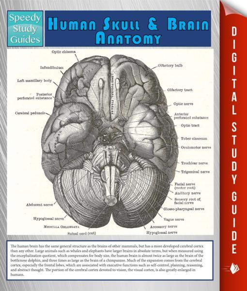 Anatomy Resource Guide for Nursing Students - 2019 ...