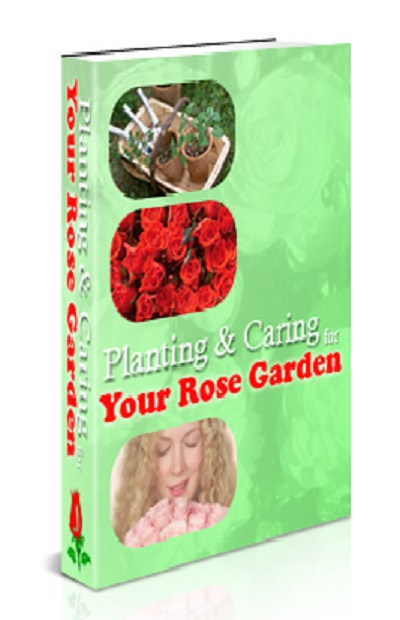 Planting & Caring for Your Rose Garden